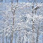 Winter Wonderland by Moonpebble