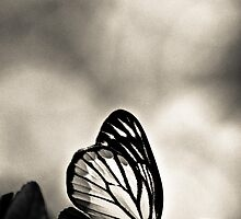 Madam Butterfly dressed in BW by Kornrawiee