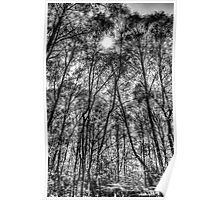 Monochrome Forest Poster
