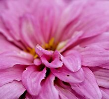 In The Pink by aprilann