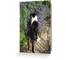 Cat Tails 5 - I Love Lavender Greeting Card