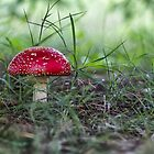 Fairy Mushroom by yolanda