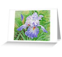 Iris drops of dew  Greeting Card