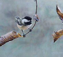 Raindrops - Chickadee in the Rain by tennantart