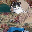 Laundry Helper by Susan S. Kline