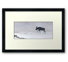 Algonquin Moose - Bull Moose Framed Print