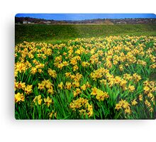 """Going """"Daffy"""" For Spring Metal Print"""