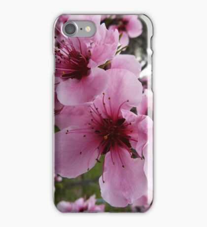 Plum Blossoms iPhone Case/Skin