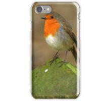 Winter Robin iPhone Case/Skin