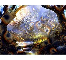 Mysterious Forest Photographic Print