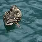 Snoozy Duck by Marie Van Schie