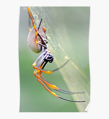 Spider up close 2 Poster