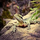 Water Dragon 2 by Alison Hill