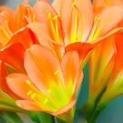 Vibrant Orange Perfection by Alison Hill