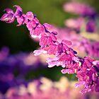 Bestbrook Garden by Alison Hill