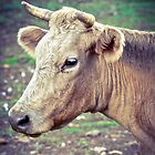 Just a Calf by Alison Hill
