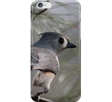 Tufted titmouse perched in a pine tree iPhone Case/Skin