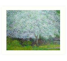Blossoming apple tree Art Print