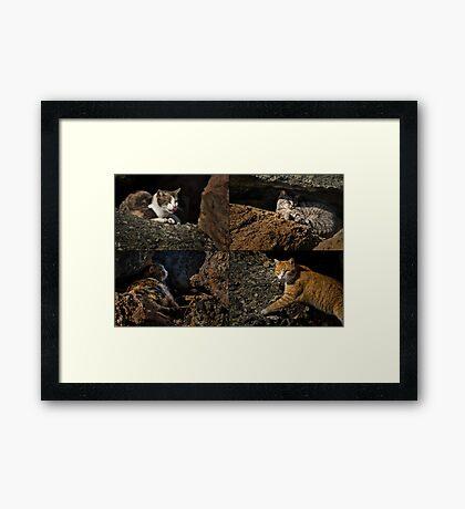 Feral cats of Rainbow Harbor Framed Print