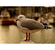 Seaguls  Photographic Print