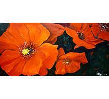 Red Poppies Flower Painting Oil on Canvas Photographic Print