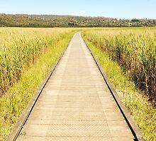 Tamar Island Boardwalk by Sara Ferrington