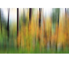 Autumn Forest II Photographic Print