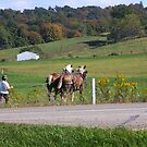 Fall in Berlin Ohio - Amish Country by Tony Wilder