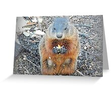 Ground Hog Greeting Card