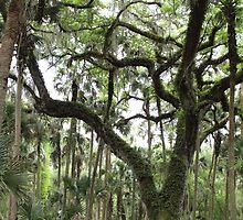 Gnarly Oak by Carol Bailey White
