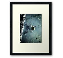 Frog in a pond Framed Print