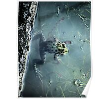Frog in a pond Poster