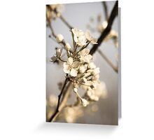 Nature Photography Greeting Card