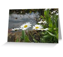Waterside daisys. Greeting Card
