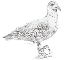 Seagull Ink Drawing by wanderingflame