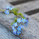 Forget me not by artsandsoul