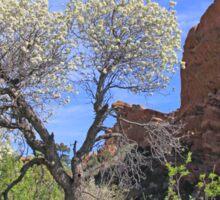 Springtime at Red Rocks Sticker
