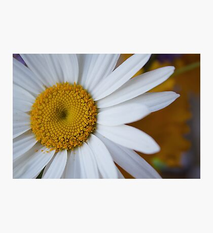 Pushing Daisies Photographic Print