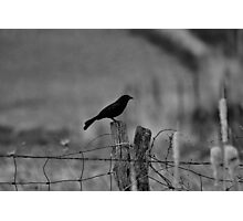 Bird on a wire Photographic Print