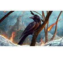 A Raven Of Ice & Fire Photographic Print