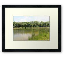 Lakeside Cane Framed Print