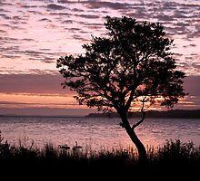 Wilson Inlet Tree at Sunrise by pennyswork