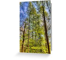 The Summer Forest Greeting Card
