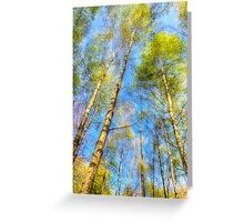 A Summer Forest Greeting Card