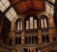 National History Museum II- London by Nadeesha Jayamanne