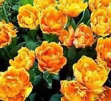 Yellow Tulips by ciaobella2u