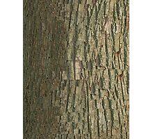 Black Oak Bark  Photographic Print