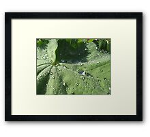 Water droplets are attacking the leaf Framed Print