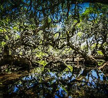 Mystical Goblin Swamp by Noeline R