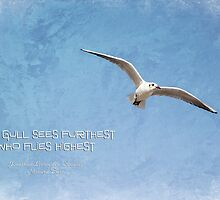 The gull sees furthest who flies highest by Amar-Images
